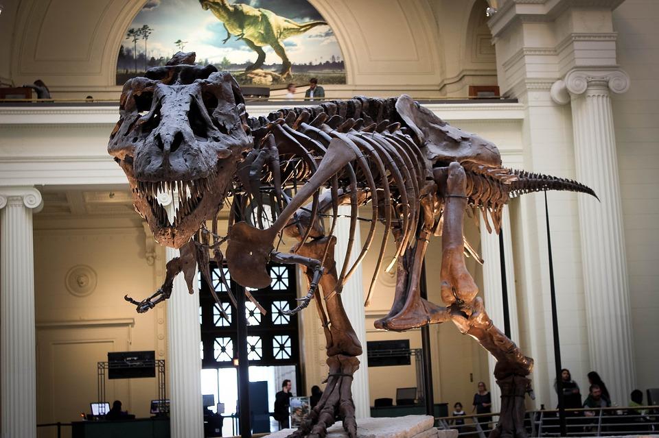 Dinosaurus, Pohon, Museum, Dino, Tyrannosaurus
